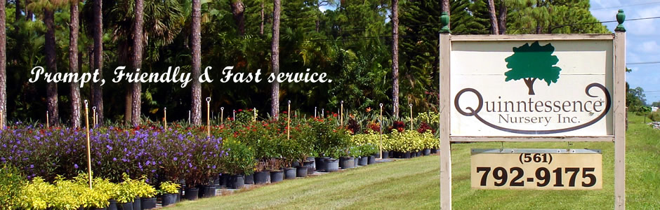 Prompt Friendly And Fast Service Florida Landscape Plant Experts