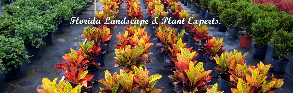 ... Florida Landscape and Plant Experts - Quinntessence Nursery Wholesale Plants And Trees In South Florida
